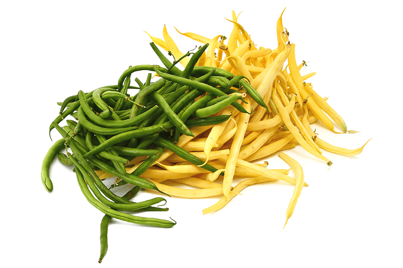 Plant of the week: Bush Beans