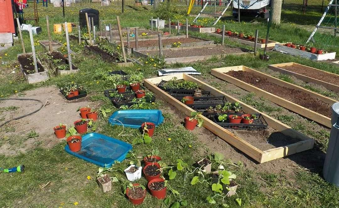 Simple Garden boxes