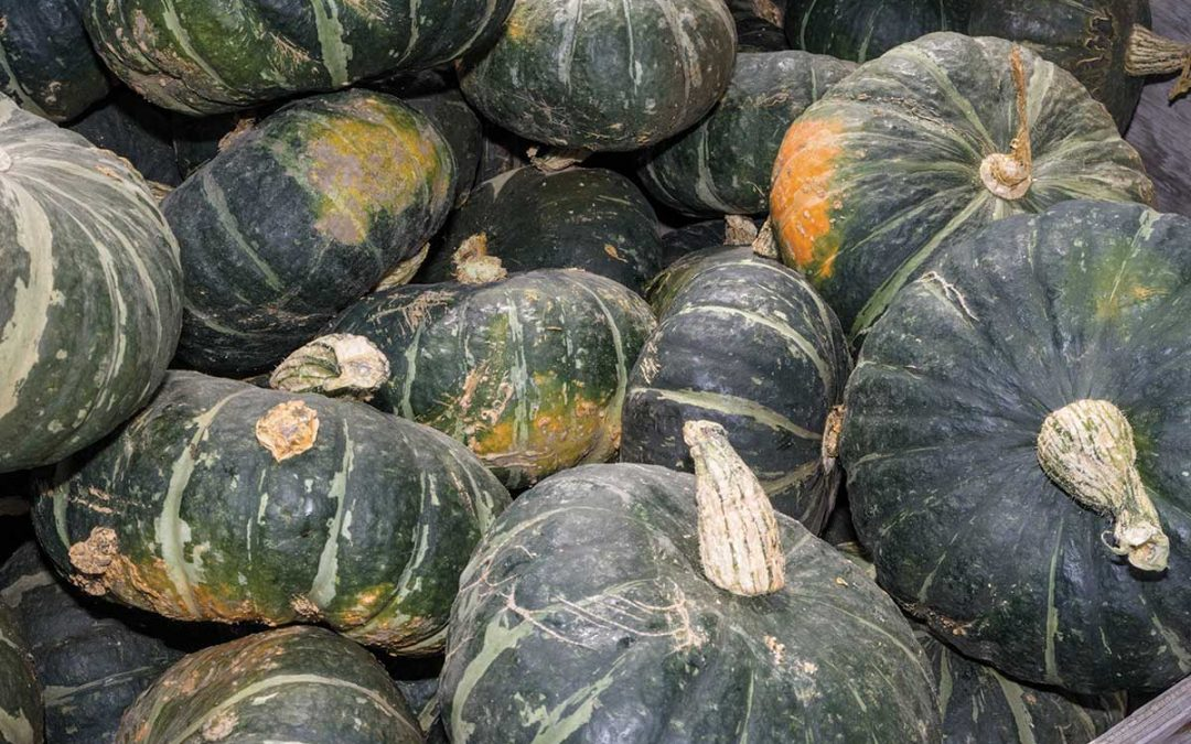 Plant of the week: Buttercup Squash